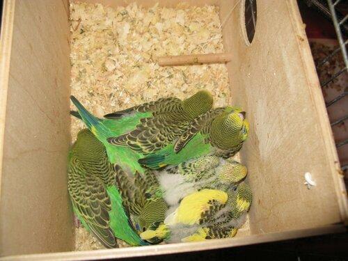 предприятия часто кокой домик нужен для попугаев такую бутылочку сиропа